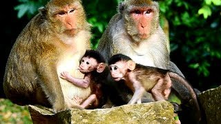 A Beautiful Day! Dax and Janna! So Cute Adorable baby Monkey! Lovely Monkeys!