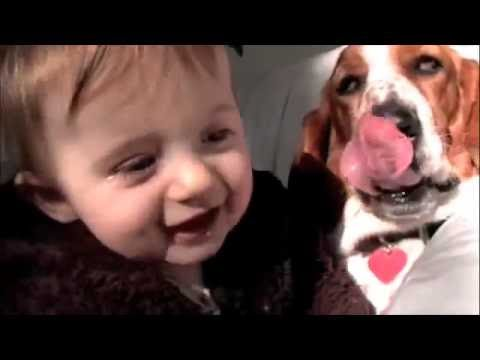Cutest baby laughing with basset hound dog