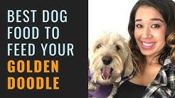 Best Dog Food For Goldendoodles and Puppies