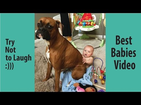 Babies Laughing At Boxer Dogs || Why Boxers Are The Best Friends For Babies