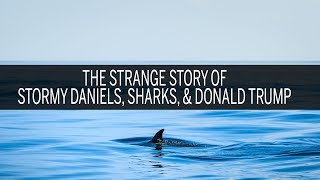The strange story of Stormy Daniels, sharks and Donald Trump