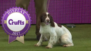 Gundog Display with Adrian & Caroline Slater | Crufts 2017