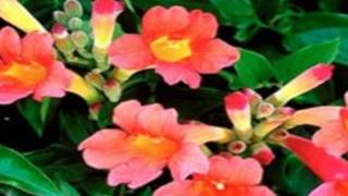 Climbing Plants Perfect For Trellis And Arbors