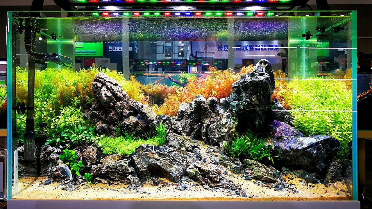 CIPS 2nd day - International Aquascaping Contest - YouTube
