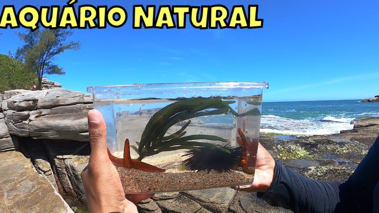 INCRÍVEL - Como fazer aquário marinho natural