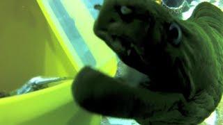 Feeding an eel in the Giant Ocean Tank