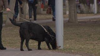 Проблема выгула домашних животных остается острой в Солигорске