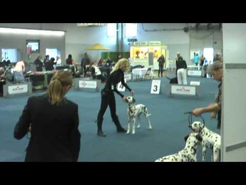 BUNDESSIEGER AUSSTELLUNG DORTMUND  2011 (Puppy cl.) -ATI  2nd Place