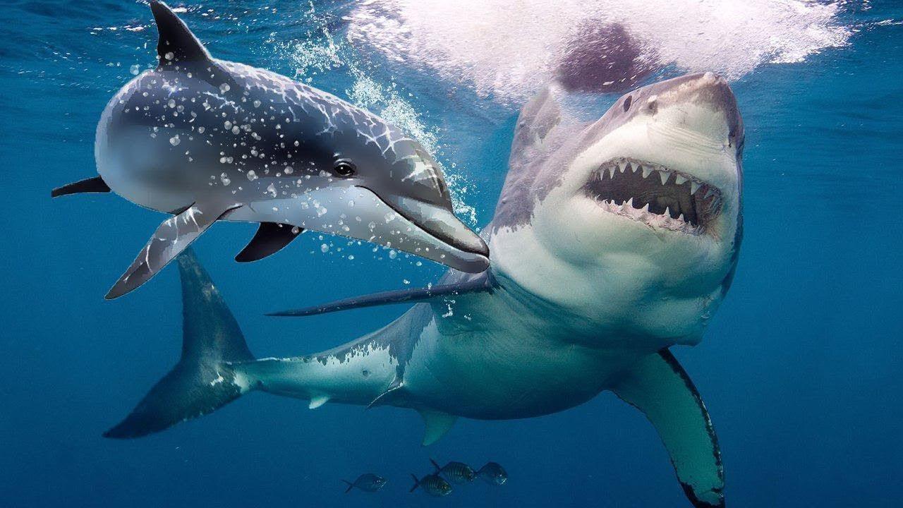 لهذا السبب تخاف أسماك القرش من الدلافين !!