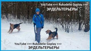 Собаки породы эрдельтерьер, Южный Урал Челябинск, лабрадор овчарка