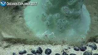 Okeanos Explorer ROV Dive July 14 2017 Ocean Bottom
