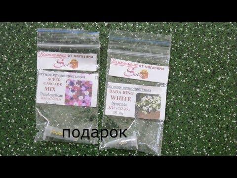 """Семена петунии из им """"Соло"""""""