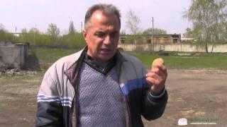 Условия посадки картофеля(Больше полезных советов картофелеведа (фото/видео): http://ovochevii-dim.com.ua/sovety-kartofeleveda Какие условия нужно соблюда..., 2015-05-05T08:02:50.000Z)