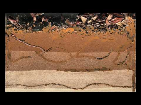 Bioturbation - Worms at Work