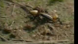 The Miracle in the Ant - The wonderful Creation of Allah - Harun Yahya Documentation - 1/4