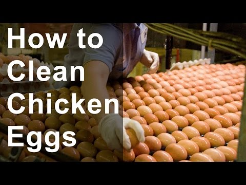 How to Clean Chicken Eggs