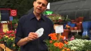 Choosing Annual Flowers
