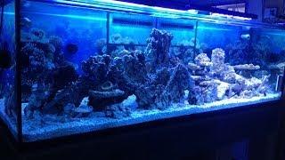 370g Reef Build - Part 3