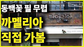 '동백꽃 필 무렵' 촬영지 실제 탐방! 구룡포 근대역사…