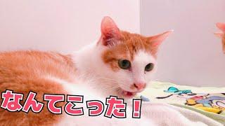 Twitterフォローしてね! @atsushi_314(更新情報と適当なつぶやき) ・サ...