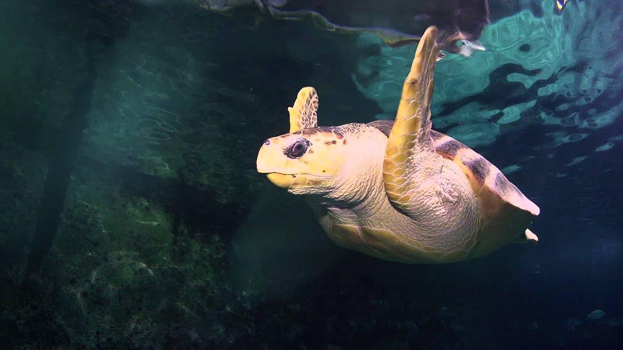 video Melbourne Aquarium Shark Dive Experience