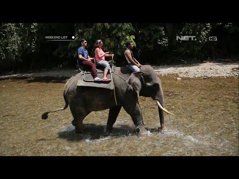 weekend-list---main-bareng-gajah-lucu-di-ekowisata-tangkahan