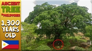 FOUND THE OLDEST LIVING TREE In Philippines (Negros Must See)