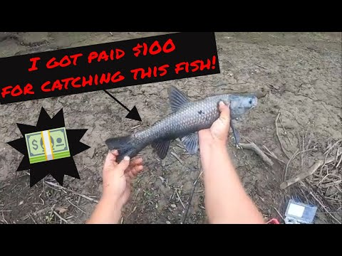 I Caught A Rare Invasive Species & Got Paid A $$$ Reward! (Plus An Interview With A Fish Biologist!)