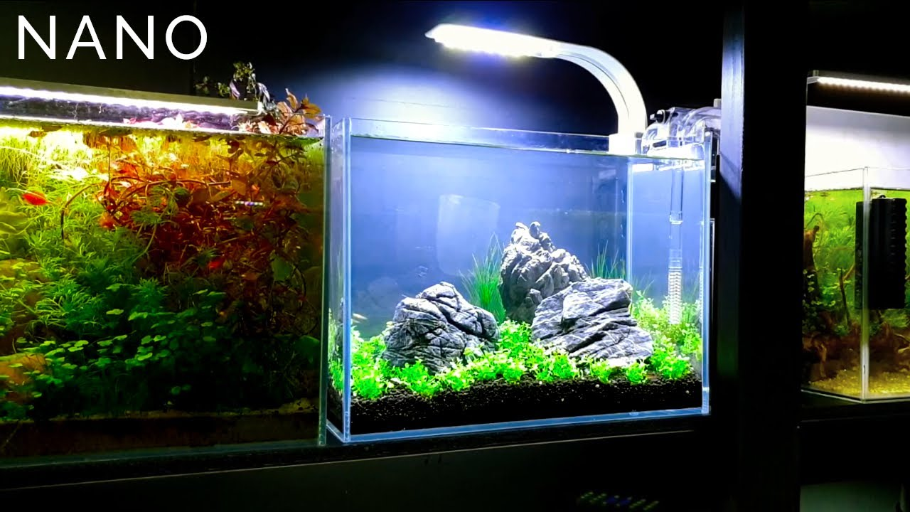 3 Gallon Nano Aquascape Setup - YouTube