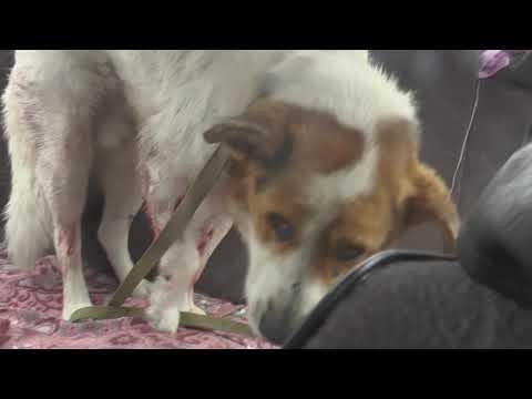Пострадал пес, оказали помощь.