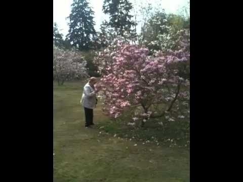 magnolia - youtube