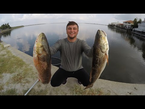 Massive Redfish In URBAN Canals! (Corpus Christi, TX)