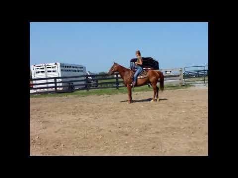 YOUTH & BEGINNER SAFE SORREL QUARTER HORSE GELDING, CONFIDENCE BUILDER, VERY BROKE 304-238-4155