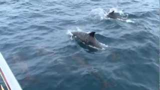 Wildlife of Sri Lanka, Whale watching in Mirissa