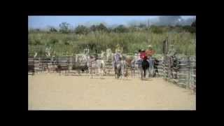 Stage tri de betail au Ranch Cow Sense