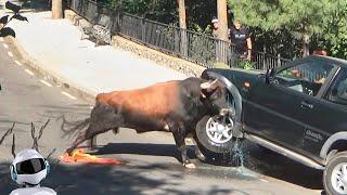 Животные Против Автомобилей / Слон, Носорог, Бык, Собаки Против Машин