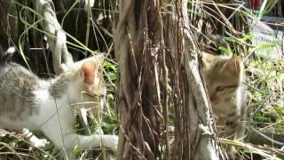 Mèo vào nhà đẻ là điềm gì