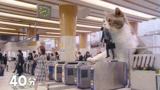 Japanese gum commercial with a cat?