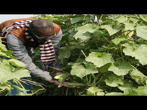 Climate Smart Farming in Cooch Behar, West Bengal.