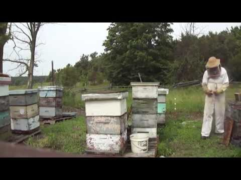 Beekeepers adding honey supers to beehives in southern Ontario July 1st 2013