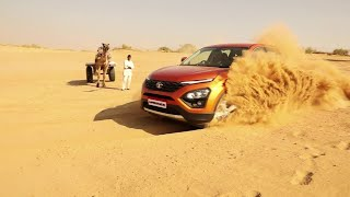 Harrier in Action: Khimsar Dunes