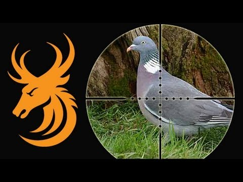 Pigeon shooting: Shotgun vs Airgun