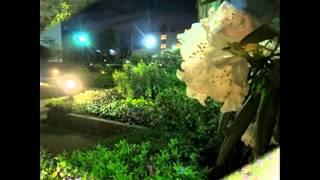 夜のうた 阪田寛夫作詞、佐々木伸尚作曲 Song of Night