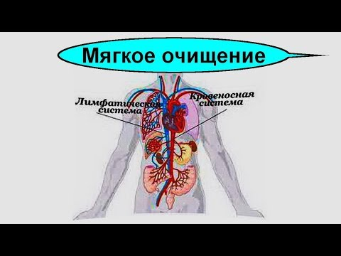 Простой рецепт очищение крови и лимфатической системы организма человека