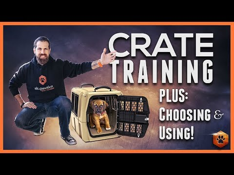 Crate Training - Why and How to do it