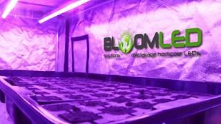Prix Bloomled De Spectrabulb Comparateur X55Avisamp; rxtshdQC