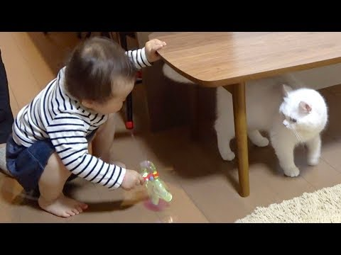 赤ちゃんの遊んで攻撃にすごく迷惑そうな猫!