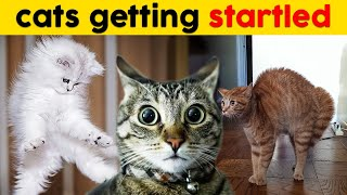 These Scared & Startled Cats Clips Will Bring You Joy ❤