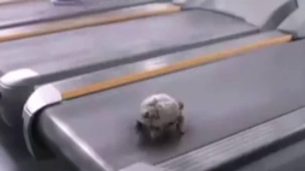turtle Walk in Treadmill - YouTube