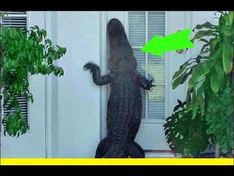Hurricane irma brings total DESTRUCTION & HUGE alligators to Florida family neighborhoods OMG